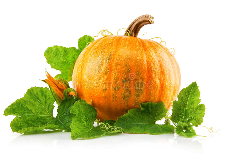 Yellow pumpkin vegetable with green leaves royalty free stock images