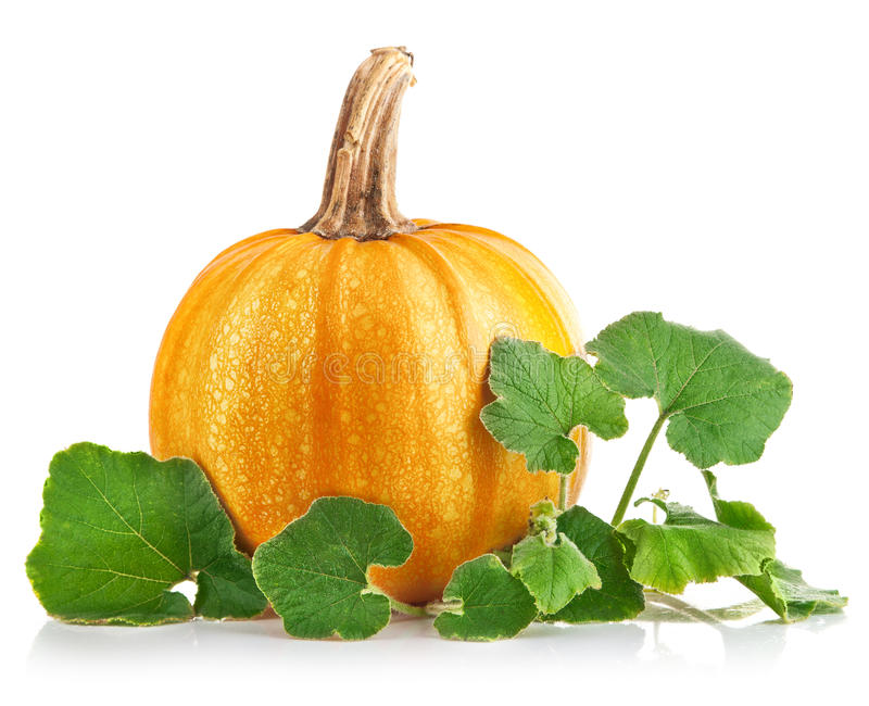 Yellow pumpkin vegetable with green leaves royalty free stock photo