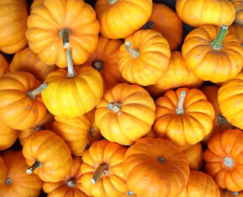 Yellow pumpkins stock photos