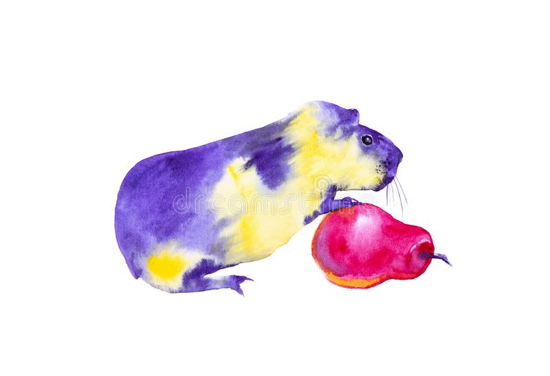 Yellow purple Guinea pig stands with its front paws on a red pear. Abstract comic watercolor illustration. Isolated on white vector illustration