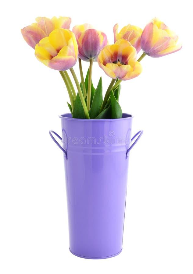 Yellow And Purple Tulips Stock Photo