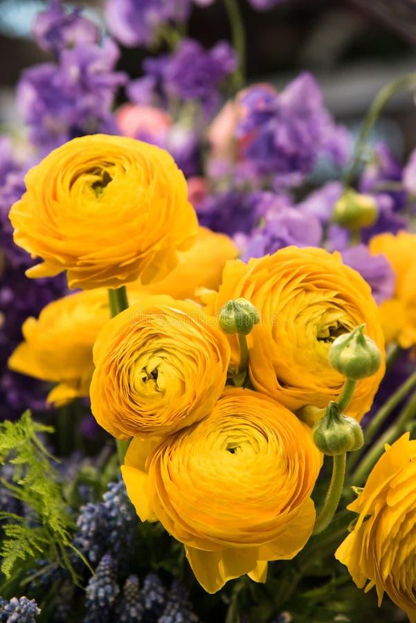 Yellow Ranunculus royalty free stock photography