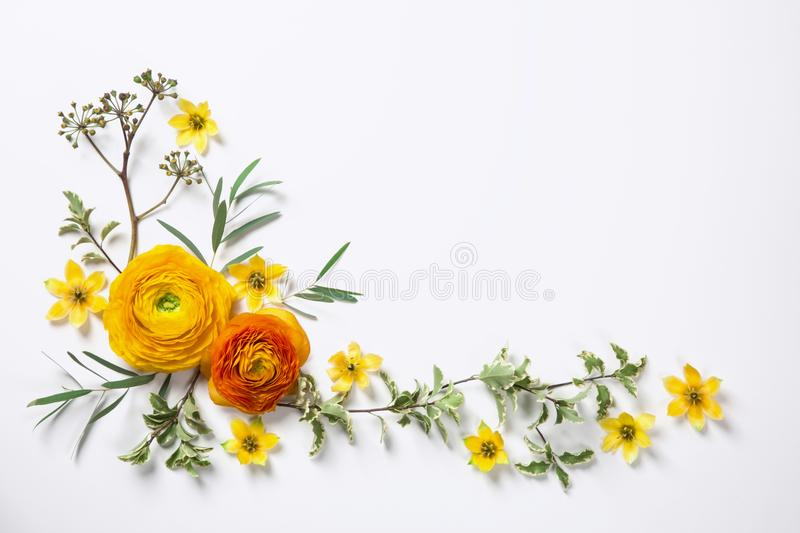 Download Yellow Ranunculus On White Background Stock Photo - Image of chic, natural: 108957430