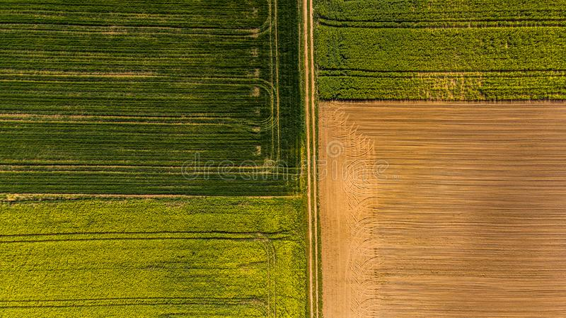 Yellow rape fields and plow soil, aerial drone view stock photo