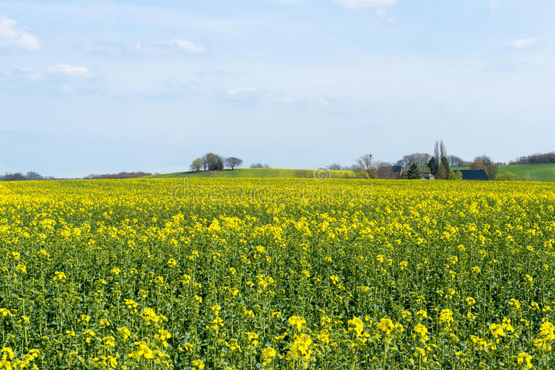 Landscape with agrarian field royalty free stock photos