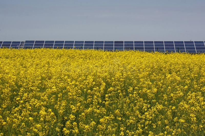 Yellow Rapeseed field in full bloom and solar panels in the background, against blue sky in summer. Green energy. stock photo