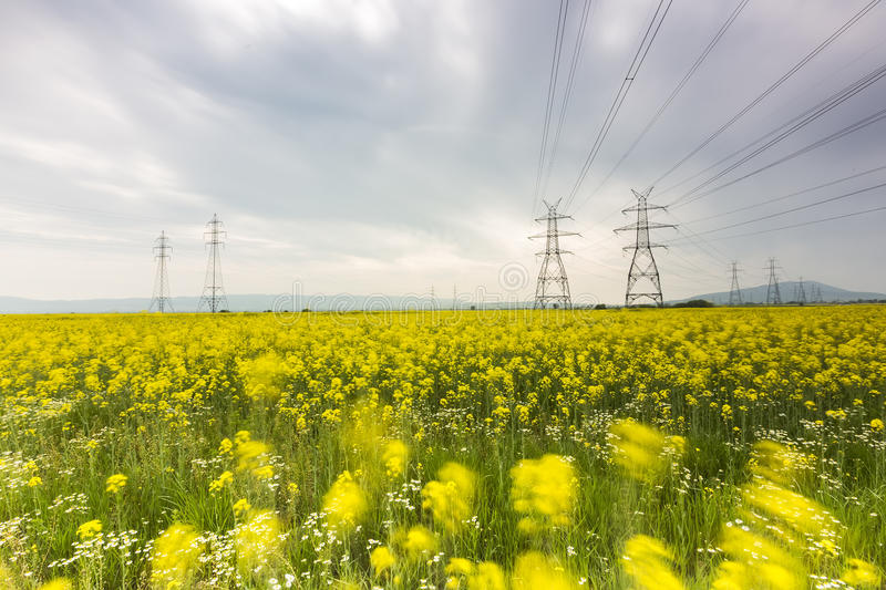 Yellow rapeseed flower field and blue sky with Electric post, in. Greece stock photo