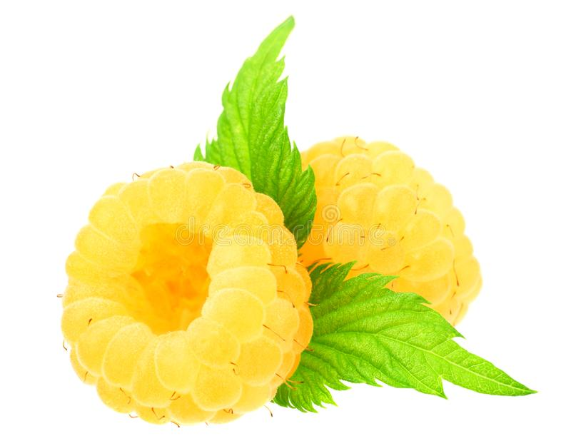 Yellow raspberries with green leaves isolated on white background. macro royalty free stock photos