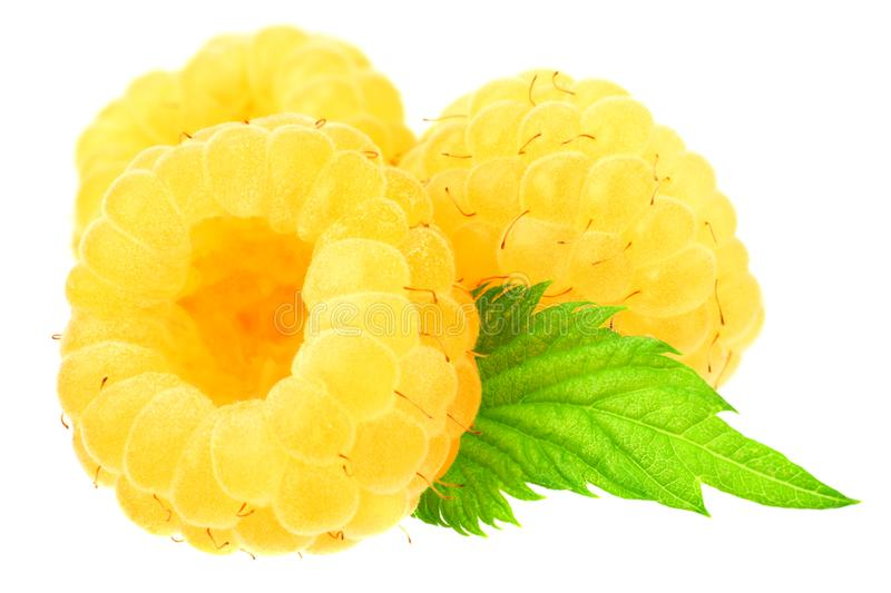 Yellow raspberries with green leaves isolated on white background. macro stock photos