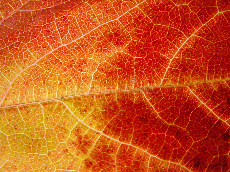 Download Yellow and read leaf stock image. Image of asymmetry, autumn - 86087