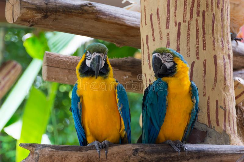 Yellow red and green parrot or macaw in a park. During day royalty free stock photo