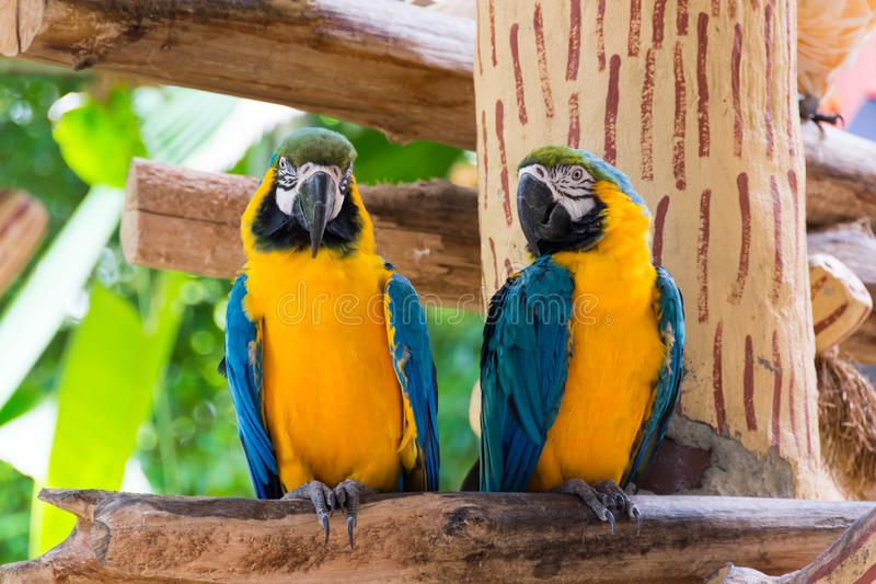 Yellow red and green parrot or macaw in a park. During day royalty free stock photography