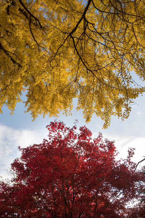 Yellow And Red Leaf Tree Under White And Blue Sunny Sky Free Public Domain Cc0 Image