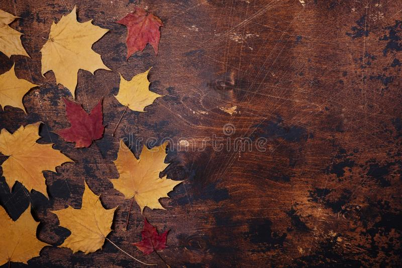 Yellow red maple leaves leaves old grunge wooden background Autumn concept Season school theme stock photo