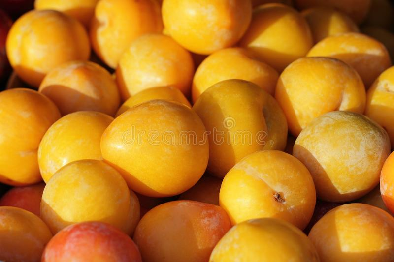Yellow and red plum under the sun on street market. Kid of fruits stock photography