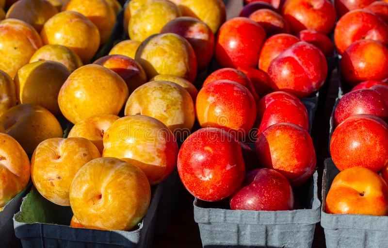 Yellow and Red Plums at a local market royalty free stock photos
