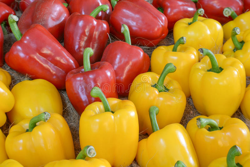 Yellow,Red Sweet pepper. royalty free stock photography