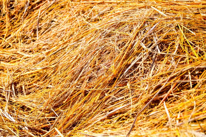 Rice straw dry royalty free stock images