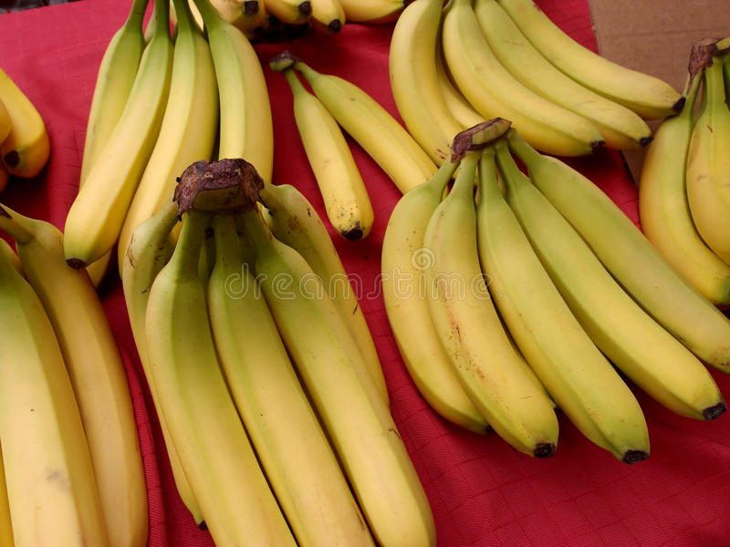 Yellow Ripe Bananas for sale at Market royalty free stock photos