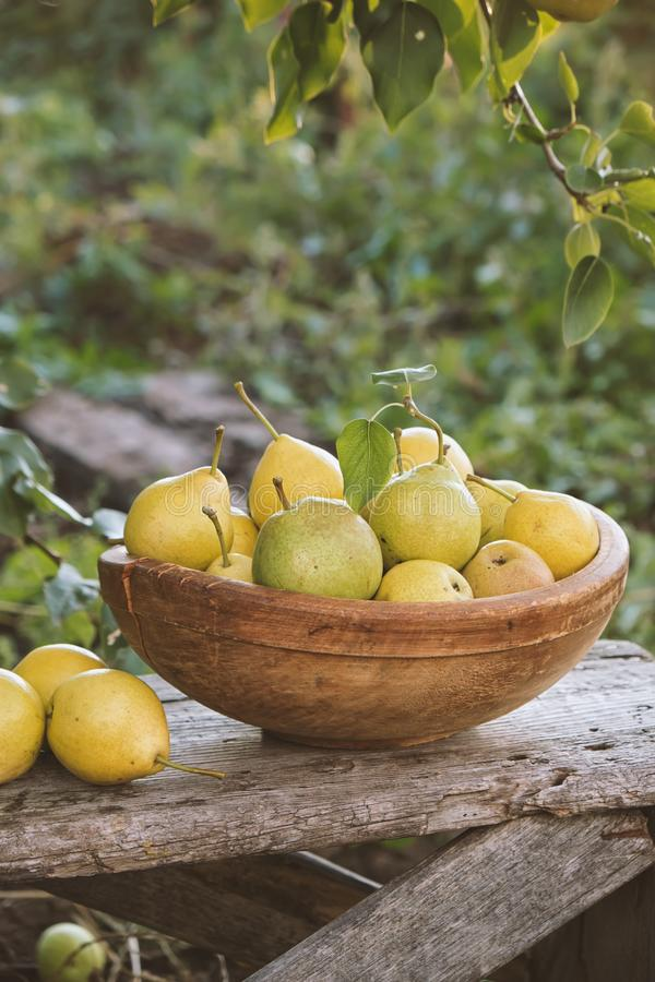 Yellow ripe pears in a bowl on the grass. stock image