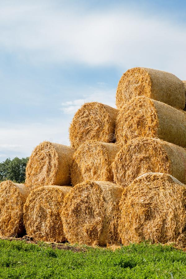 Yellow rolls of straw in the end of summer royalty free stock photo