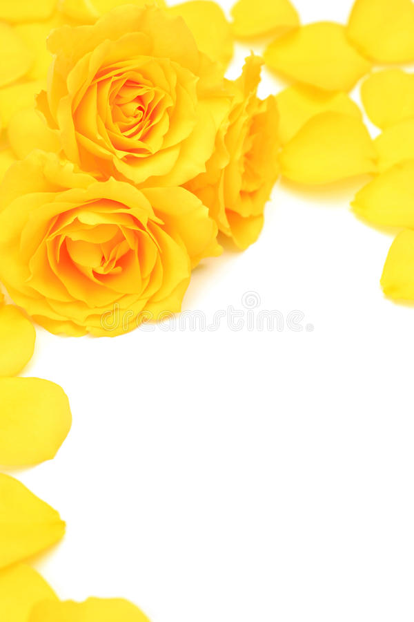 Download Yellow rose stock image. Image of yellow, petal, arrangement - 22260775