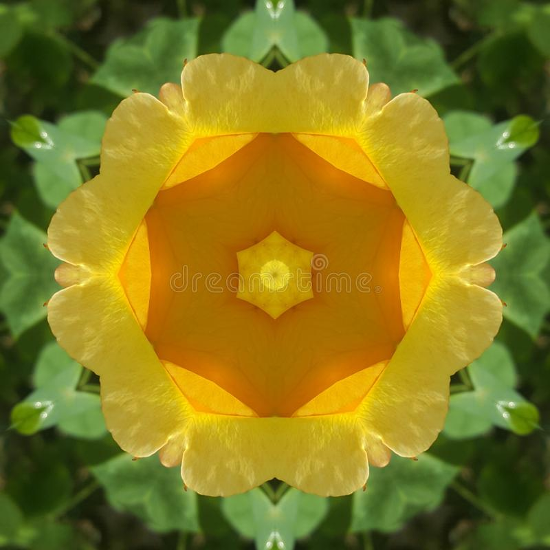 Yellow rose abstract photo art. Garden royalty free stock images