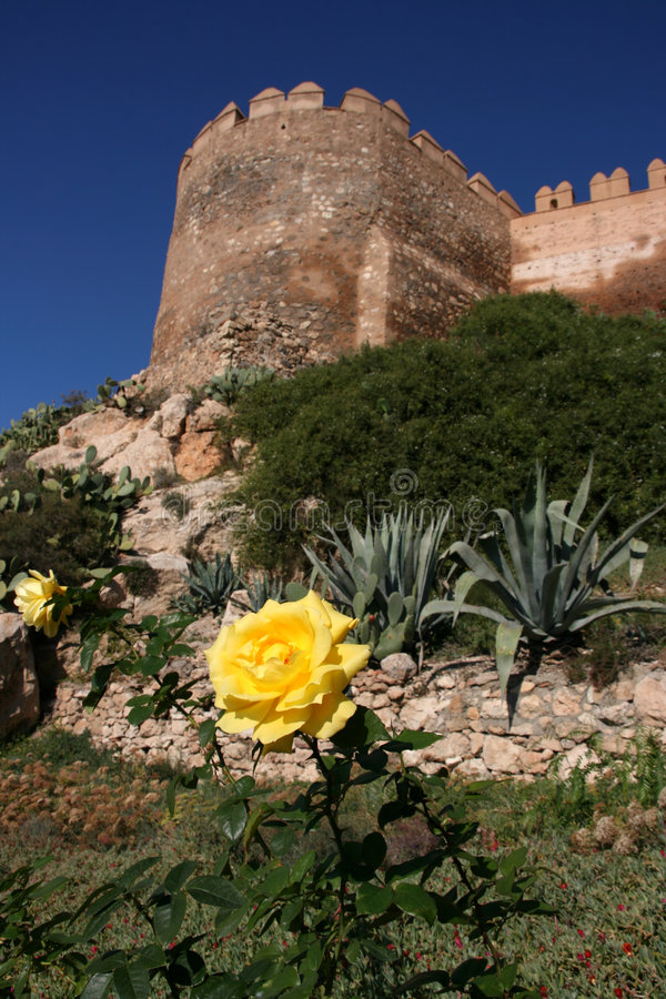 Yellow rose in Almeria royalty free stock photos