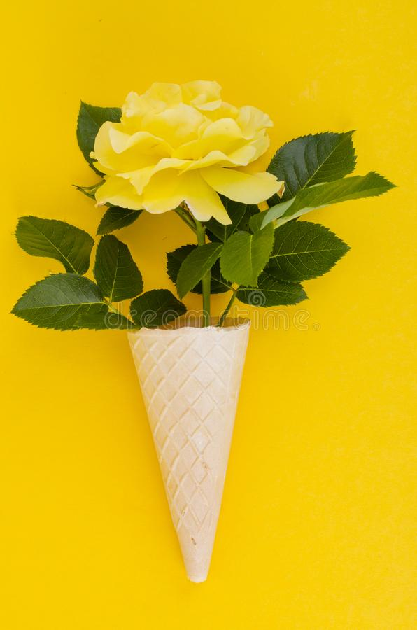 Yellow rose in cone on bright background royalty free stock photo