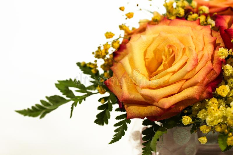 Yellow rose flowers arrangement isolated on white.  royalty free stock image