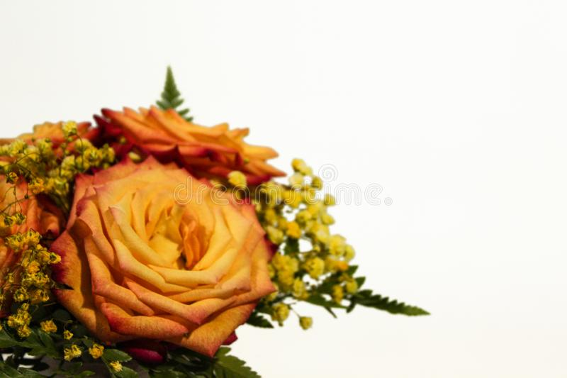 Yellow rose flowers arrangement isolated on white.  royalty free stock photos