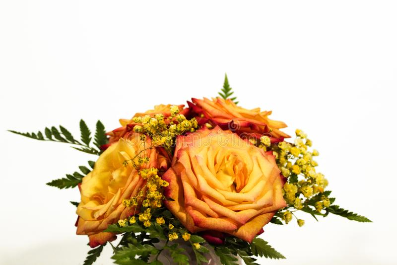 Yellow rose flowers arrangement isolated on white.  stock images