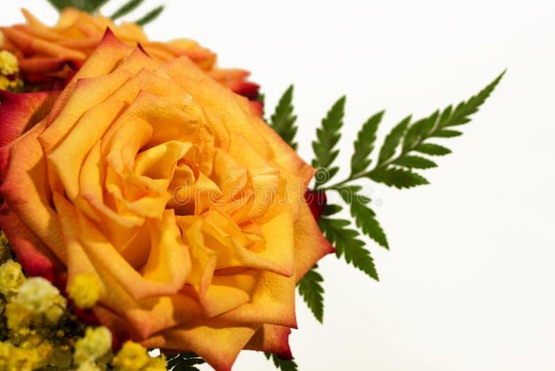 Yellow rose flowers arrangement isolated on white.  stock image