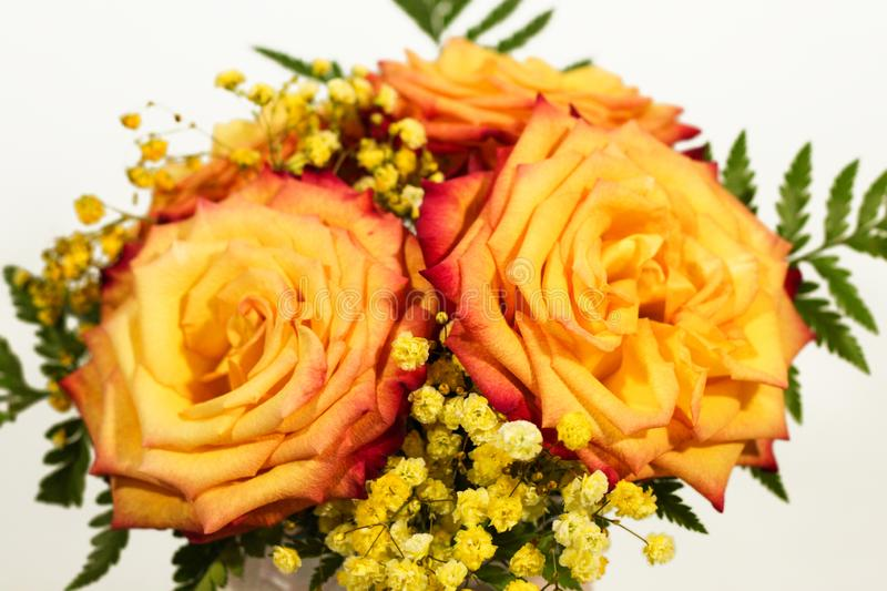 Yellow rose flowers arrangement isolated on white.  royalty free stock photo