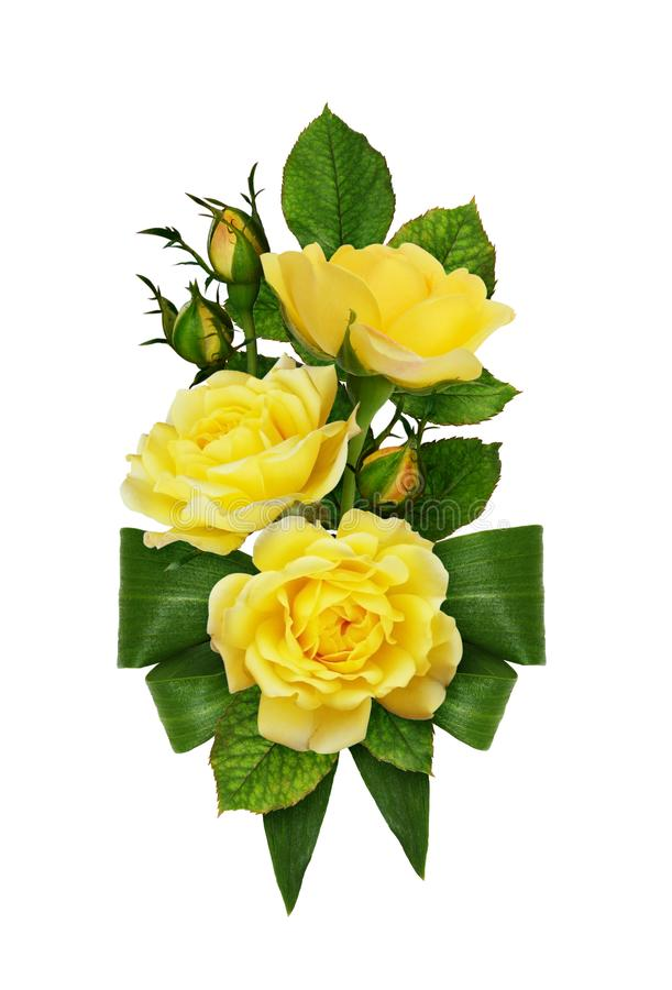 Yellow rose flowers and buds with green bow from fresh leaves in stock images