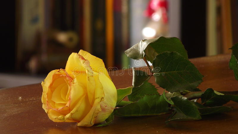 Yellow Rose on Wooden Table stock image