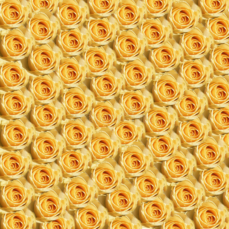 Download Yellow Roses stock image. Image of yellow, pattern, wallpaper - 107483