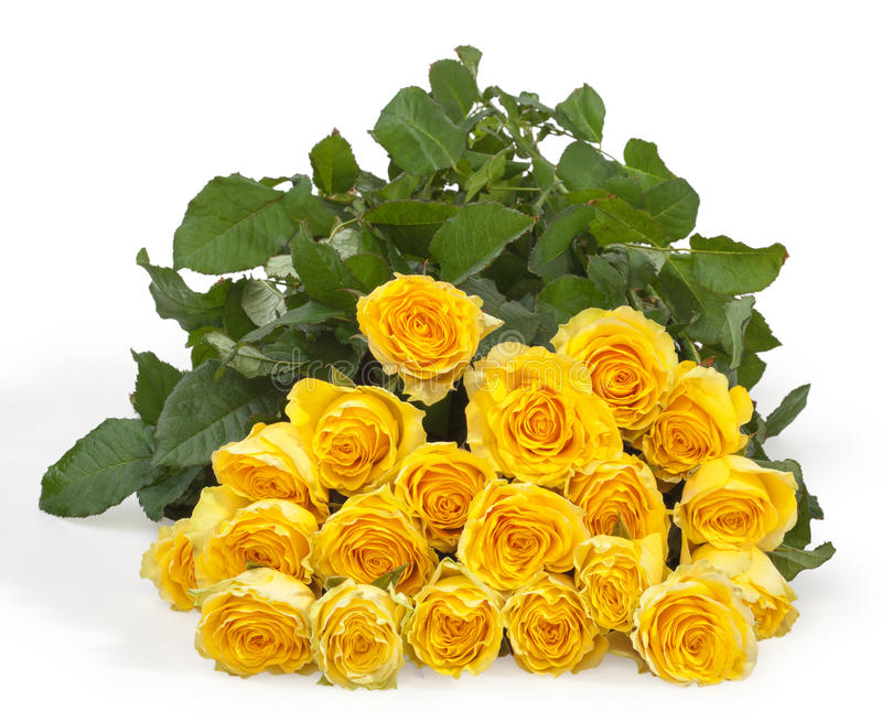 Download Yellow roses stock image. Image of blossom, flower, gift - 23538929