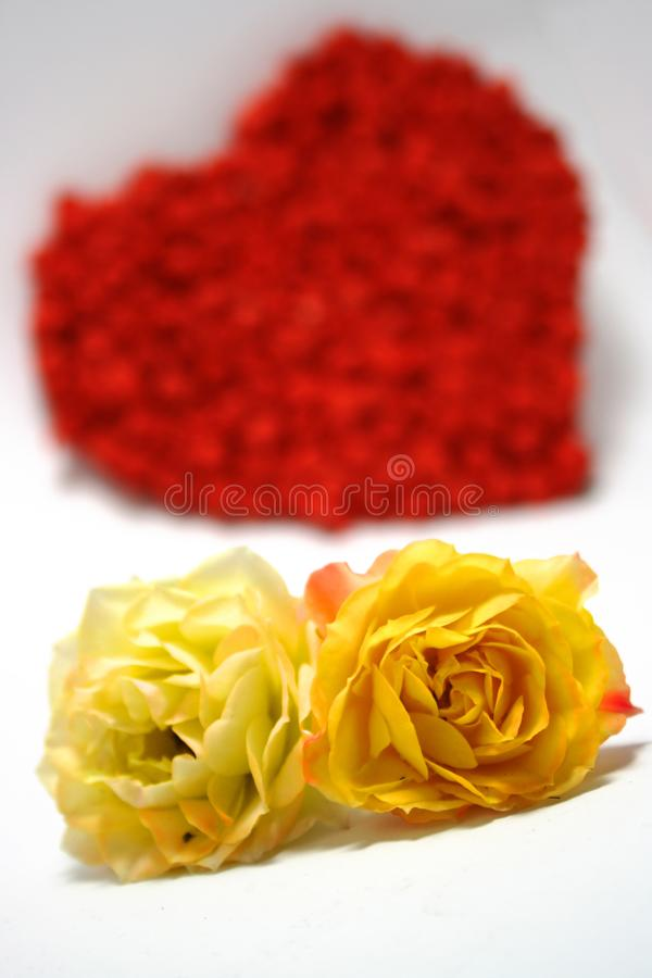Download Yellow Roses Against Red Heart On Background Stock Image - Image of love, feeling: 7011859