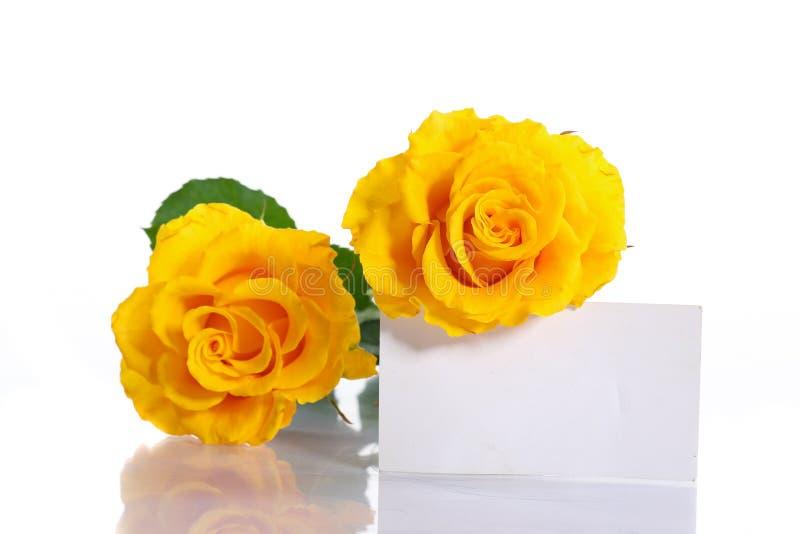 Download Yellow roses stock image. Image of floral, fresh, gardening - 34319273