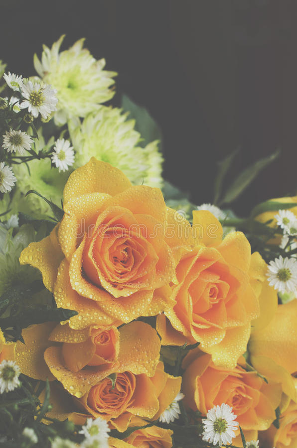 Yellow roses on a black background, selective focus. Yellow roses on a black background, tinting, selective focus stock images