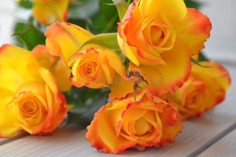 Yellow roses bouquet over blue turquoise wooden table stock photography