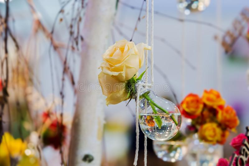 Yellow roses in a bulb with water. Vase with flowering plants hanging on a rope on a background of blurry flowers and foliage. stock image