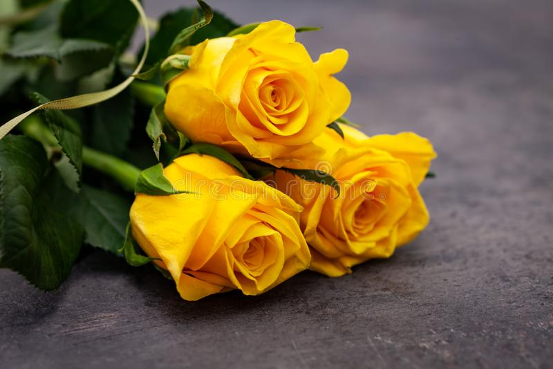 Yellow roses on on dark background royalty free stock image