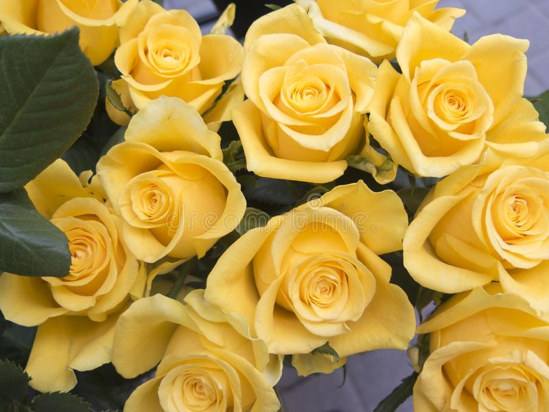 Yellow roses, detail royalty free stock photo