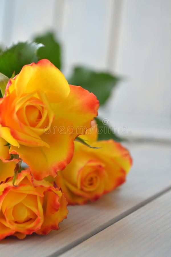 Yellow roses flowers arranged on wooden background stock images