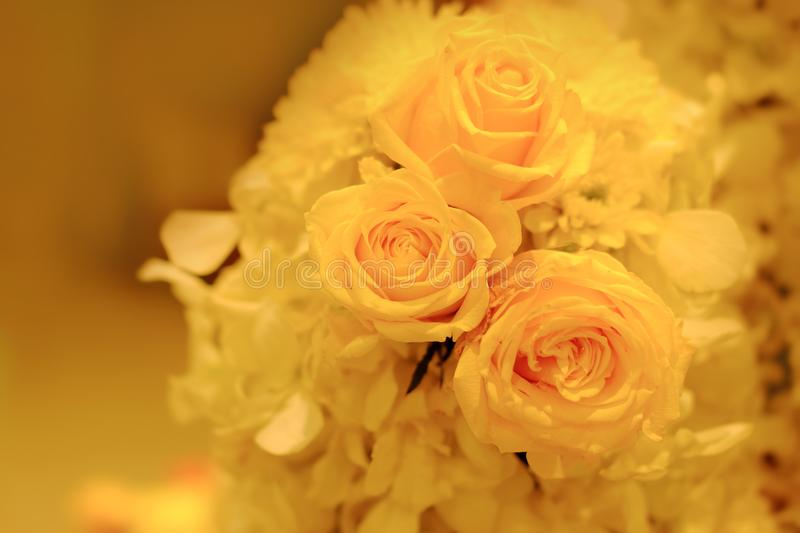 Yellow roses hid in mind. The hidden meaning of the yellow rose is Adultery in the heart royalty free stock images