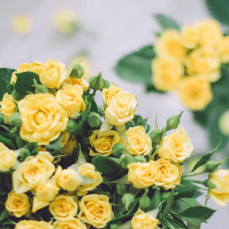 Yellow roses - wedding, holiday and floral garden styled concept. Elegant visuals royalty free stock photos
