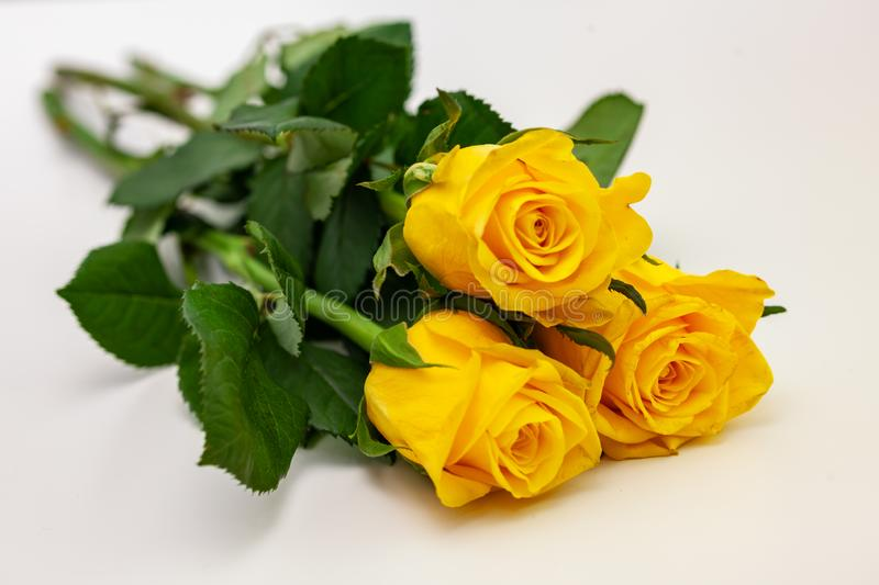 Yellow roses on white background, isolated.  stock image