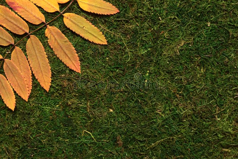 Autumn leaves on green background royalty free stock images